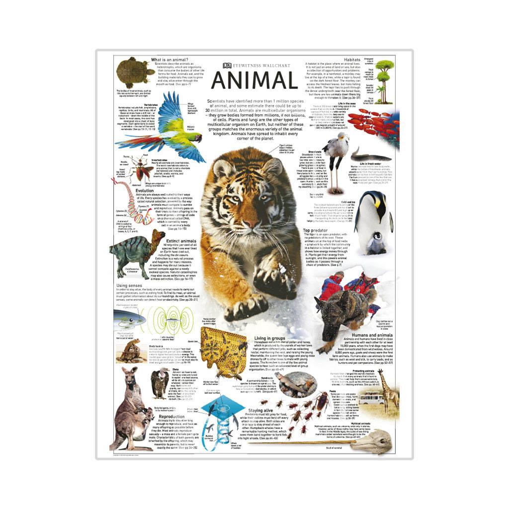 """Kniha """"Eyewitness Animal"""""""