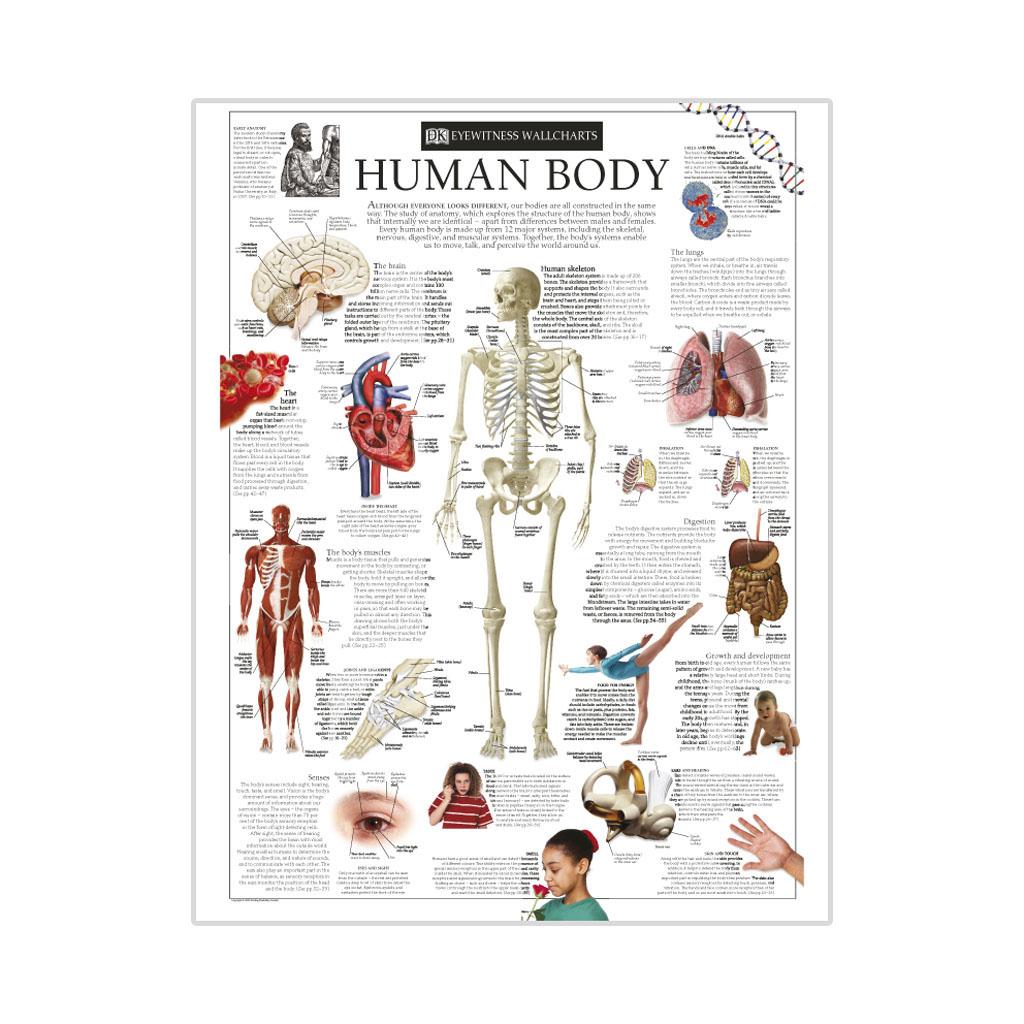 "Kniha ""Eyewitness Human Body"""