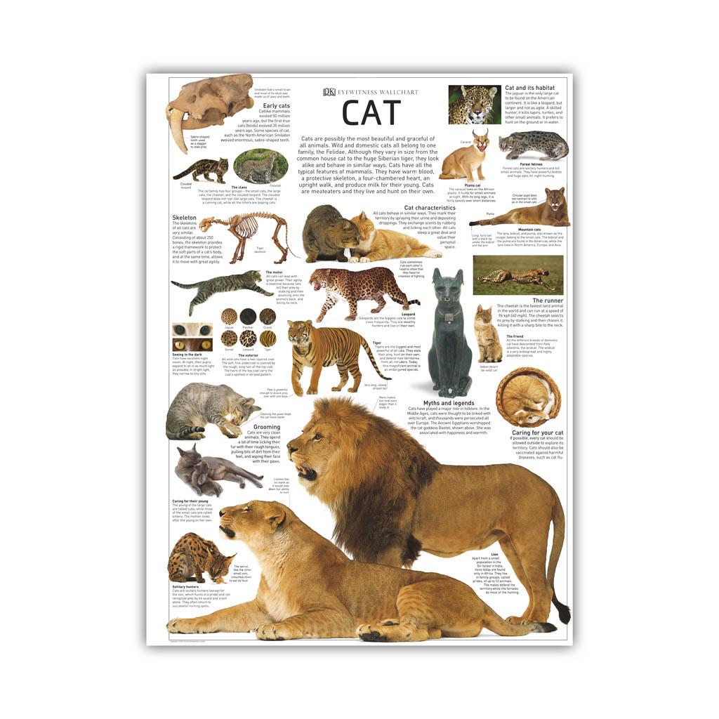 "Kniha ""Eyewitness Cat"""