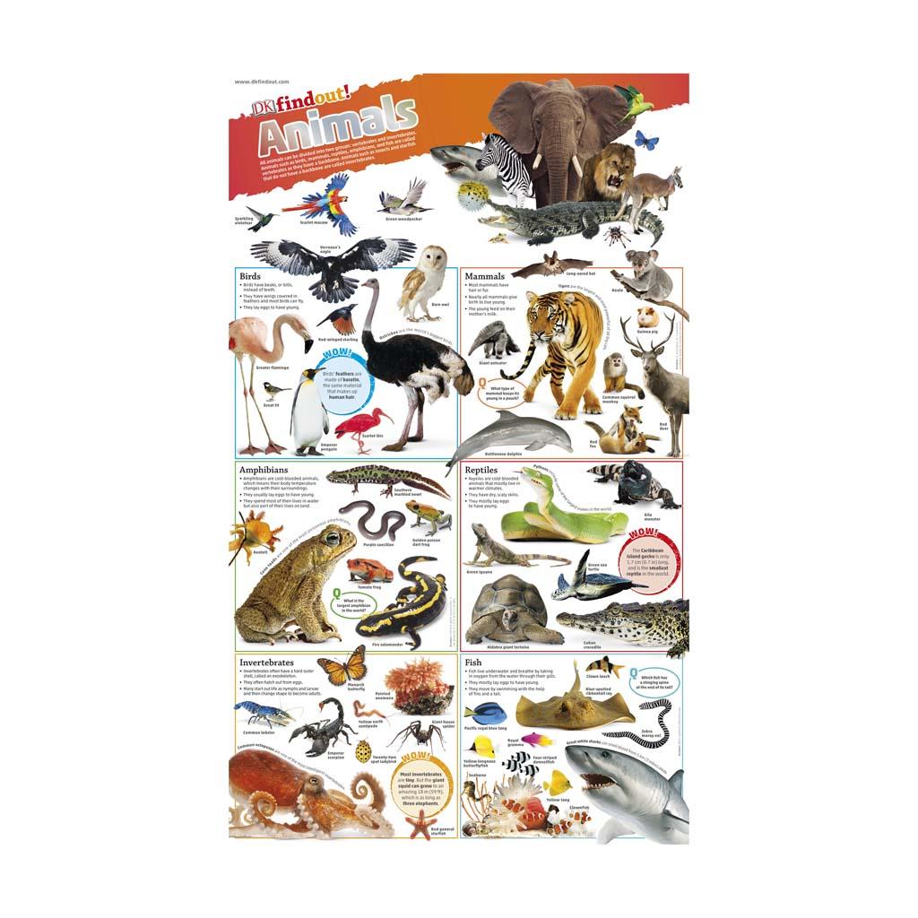 """XXL plagát """"DKfindout! Poster - Animals"""""""