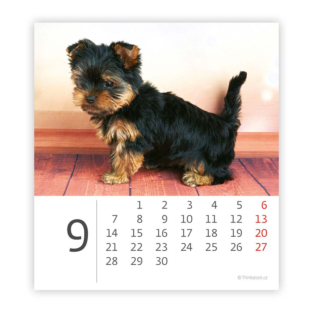 Mini Puppies 2020 SK (96x105 mm), mesačný